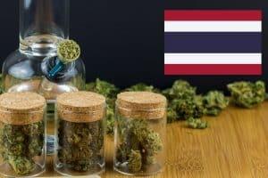 Contaminated Marijuana Exposed by Thailand Authorities