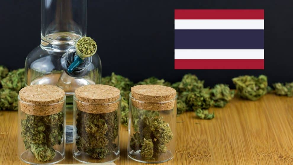 Contaminated Marijuana Exposed by Thailand Authorities
