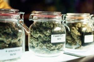 Surging Demand for Recreational Marijuana