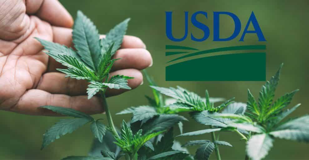 USDA Gives Texas Farmers Heads Up to Grow Hemp