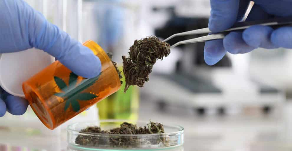 Utah Medical Marijuana Scheme Likely to Begin in March