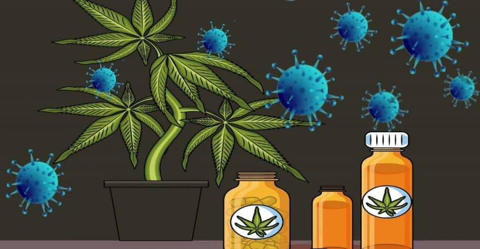 Cannabis and CBD Are Helpful in COVID-19 Outbreak