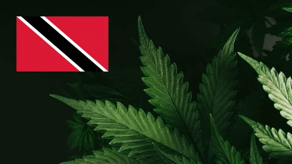 Trinidad and Tobago Government May Decriminalize Cannabis