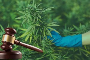 Italy Court Rules in Favor of Cultivating Cannabis for Personal Use