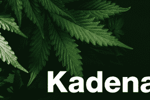 Kadena is Set to Collaborate With Rymedi to Launch Its Blockchain Platform to Track Cannabidiol Oil