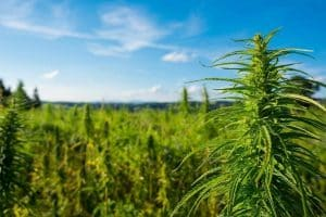 USDA Approves First State Hemp Plans for 3 US States