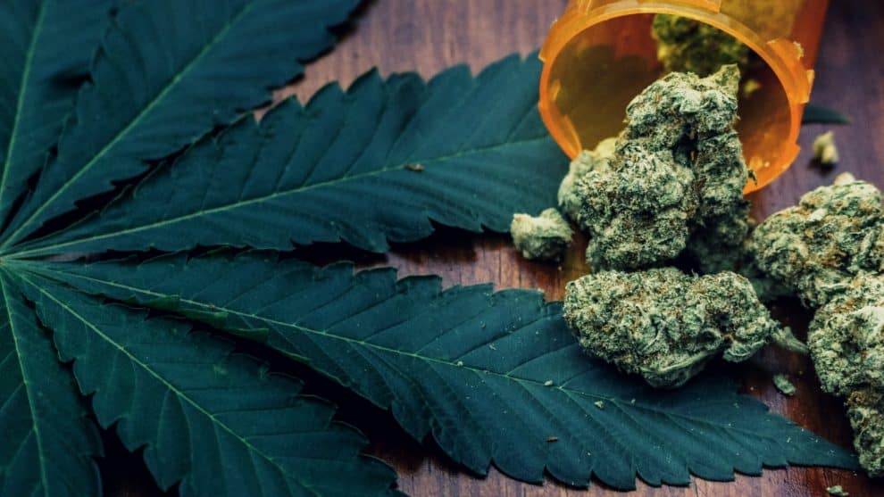 Zeacann and AUT Obtain Licenses For R&D of Medicinal Cannabis
