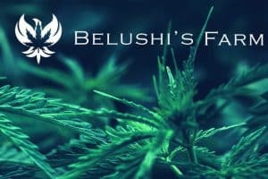 Jim Belushi to Deliver a Keynote at Cannabis Conference, Las Vegas