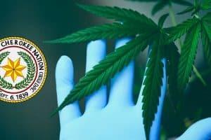 Cherokee Nation to Study Hemp and Cannabis Industry in Oklahoma