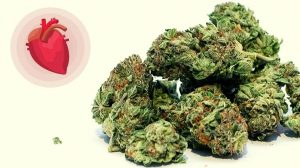 Heart Patients Might Be at Greater Risk With Marijuana Usage