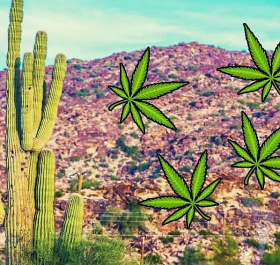 Tests Find High THC Levels in Some Hemp Crops of Arizona