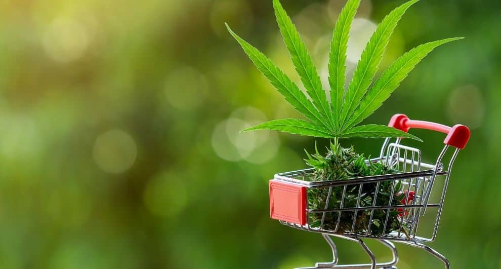 Illegally Grown Marijuana Plants Found in Northern California
