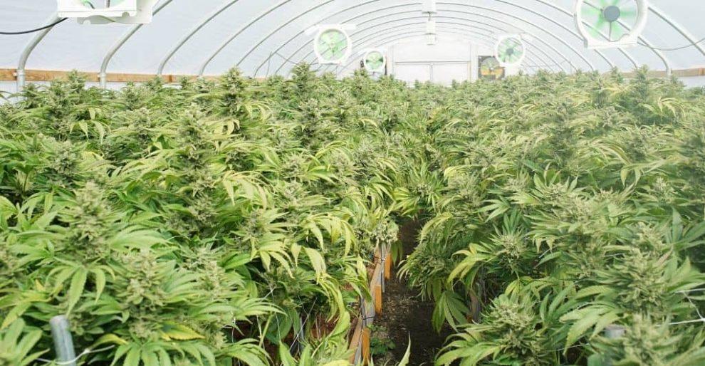 Utah expands medical cannabis access