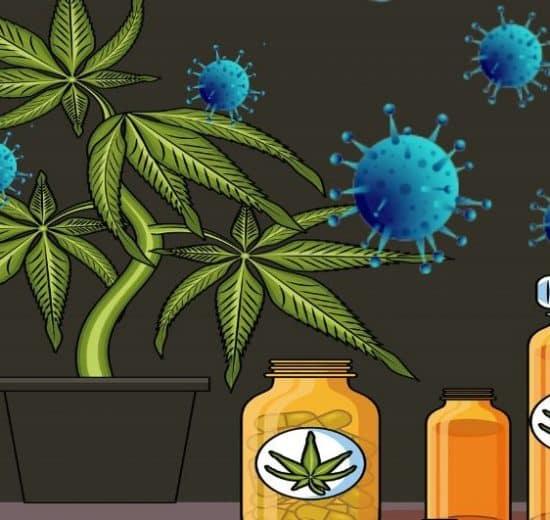 Cannabis and CBD Are Helpful in COVID-19 Outbreak